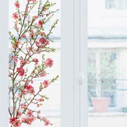 Fleurs de pommier japonais